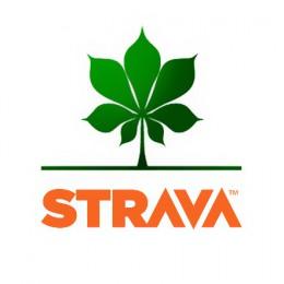 cyklomaniacy-strava-team